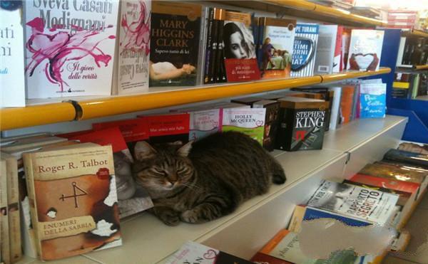 一只猫和书